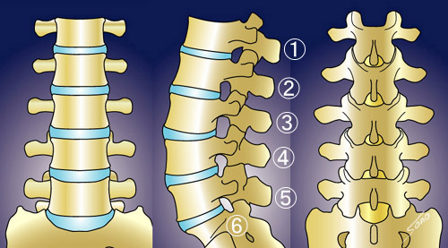 腰椎の説明 へ